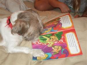 Augie Dog Reading