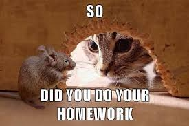 cat-mouse homework